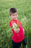 Boy on a green field of wheat Royalty Free Stock Images