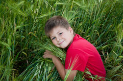 Boy on a green field of wheat Royalty Free Stock Photography