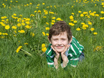 The boy is on the green grass. With dandelions Royalty Free Stock Photo