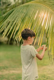 The boy on the green grass holding a palm branch Stock Images