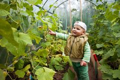 Boy in a greenhouse with cucumbers Stock Photography