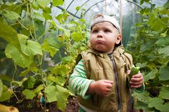 Boy in a greenhouse with cucumbers Royalty Free Stock Photo