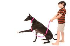 Boy with Greyhound Over White Royalty Free Stock Photos