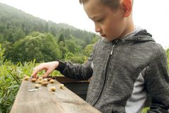 Boy and Group of Snails. Happy Boy and Group of Snails on the Wooden Plank. Wild Life of Snails in the Nature. Boy discovering the nature royalty free stock image