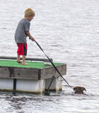Boy Guides Swimming Dog. A six-year old boy uses the leash to guide his pet dog swimming around the floating dock in St. Andrews east bay in Panama City, Florida Royalty Free Stock Photo