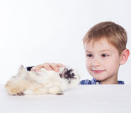 A boy with guinea pig. Royalty Free Stock Image