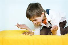Boy and hamster. The boy with little syrian hamster Royalty Free Stock Images