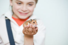 Boy and hamster. The boy is holding  little syrian hamster Stock Photo