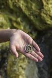 Boy hand holding seashell Stock Photo