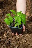 Boy hand holding small plant Royalty Free Stock Photo