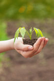 Boy hand holding young plant Royalty Free Stock Photo