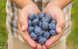Boy hands holding blueberries Royalty Free Stock Photos