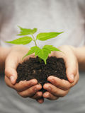 Boy hands holding young plant. Against spring green background. Ecology concept Stock Images