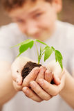 Boy hands holding young plant Royalty Free Stock Images