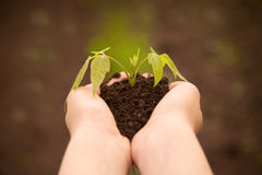 Boy hands holding young plant Royalty Free Stock Photos