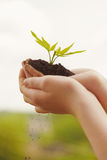 Boy hands holding young plant Royalty Free Stock Photography