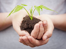 Boy hands holding young plant Stock Photos