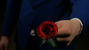 Boy hands out rose as his valentine present for his lover stock video footage