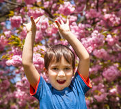 Boy with hands up against cherry blossoms background Royalty Free Stock Photography