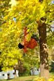 Boy Hang On Tree Stock Photography