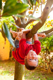 Boy hanging from a tree branch Royalty Free Stock Image