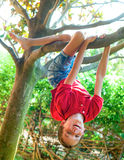 Boy hanging from a tree branch Stock Photos