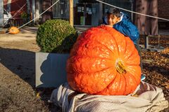 A boy is happy to see giant pumpkin in the backyard; countryside rustic life