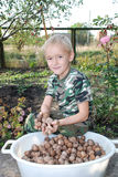 The boy on the edge of the tub with walnuts. The boy after the harvest sits on the edge of the tub filled with walnuts royalty free stock photo