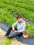 Boy with harvest of strawberries in a basket. On the field Royalty Free Stock Photography