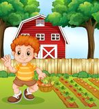 A boy harvest vegetable. Illustration stock illustration