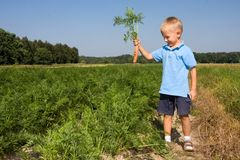 Boy harvesting carrots on field Royalty Free Stock Photography