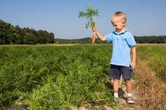 Boy harvesting carrots on field Royalty Free Stock Photography