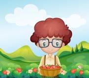 A boy harvesting strawberries Stock Photo