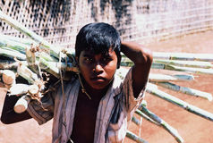 Boy hauling sugarcane Royalty Free Stock Images
