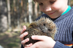 Boy with hedgehog Stock Image
