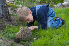 Boy and hedgehog. Boy with huge interest is looking at the hedgehog Royalty Free Stock Photos