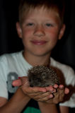 Boy with a hedgehog on hands Royalty Free Stock Photos