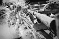 Boy help to feed a donkey at the farm Stock Photo