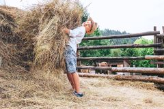 Boy helps on farm. Brings the hay for farm animals Stock Image