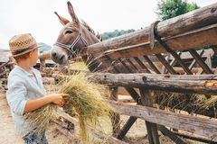Boy helps on farm - feeds a donkey Royalty Free Stock Photo