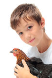 The boy with the hen Royalty Free Stock Photo