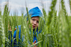 The boy hid in the field of wheat Stock Photos