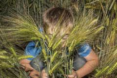 A boy hiding in green corn and a young boy in the summer sunshine. Stock Photo