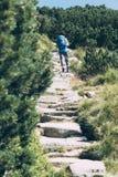 Boy hiking among the dwarf pine Royalty Free Stock Photo