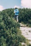 Boy hiking among the dwarf pine Royalty Free Stock Image