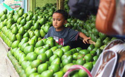 A boy and his avocados Royalty Free Stock Photography