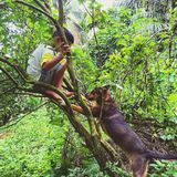 A boy and his dog climb the tree. Fun enjoy playtime risk brave extreme branch garden green outdoor friend friendship Royalty Free Stock Image