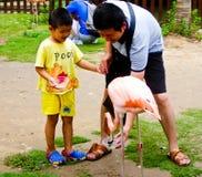 A boy and his father feeding a flamingo Stock Photography