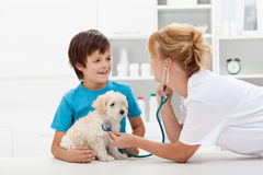 Boy and his fluffy dog at the veterinary checkup Stock Images
