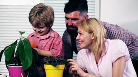 The boy, with his parents, water flowers that have just been planted in colored pots. Little gardener. Summer potted. Plants stock video footage